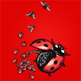 Ladybird Factory